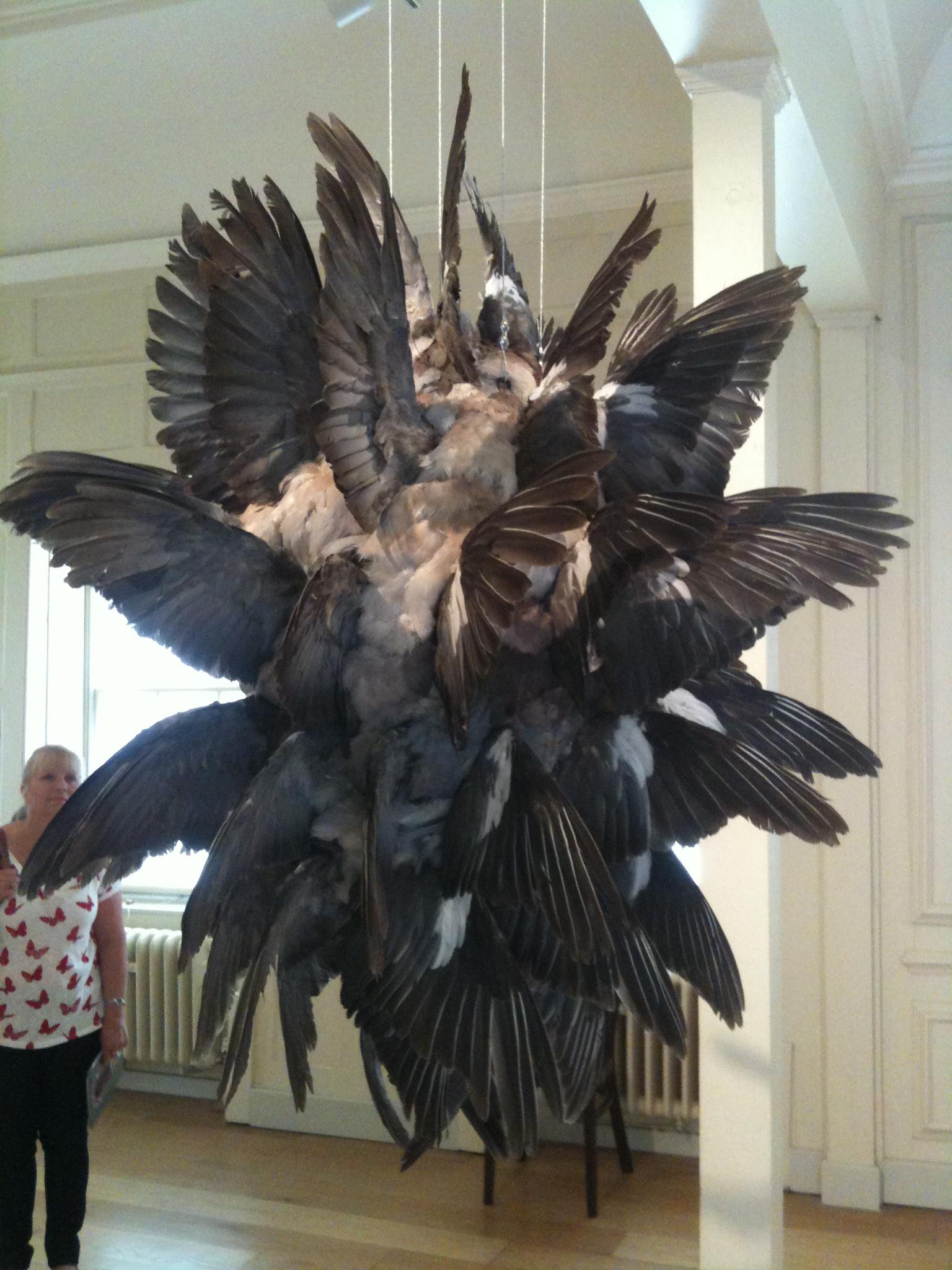 speciesisminart pigeons