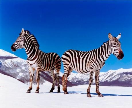 speciesisminartPaolaPivi2